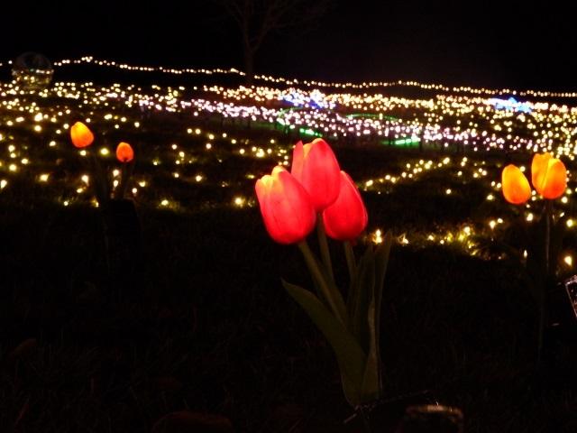 チューリップ公園に10万球のイルミネーション!